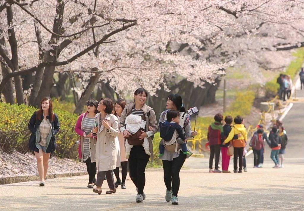15 벚꽃행사 사진1