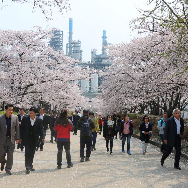 SK인천석유화학과 함께하는 벚꽃나들이