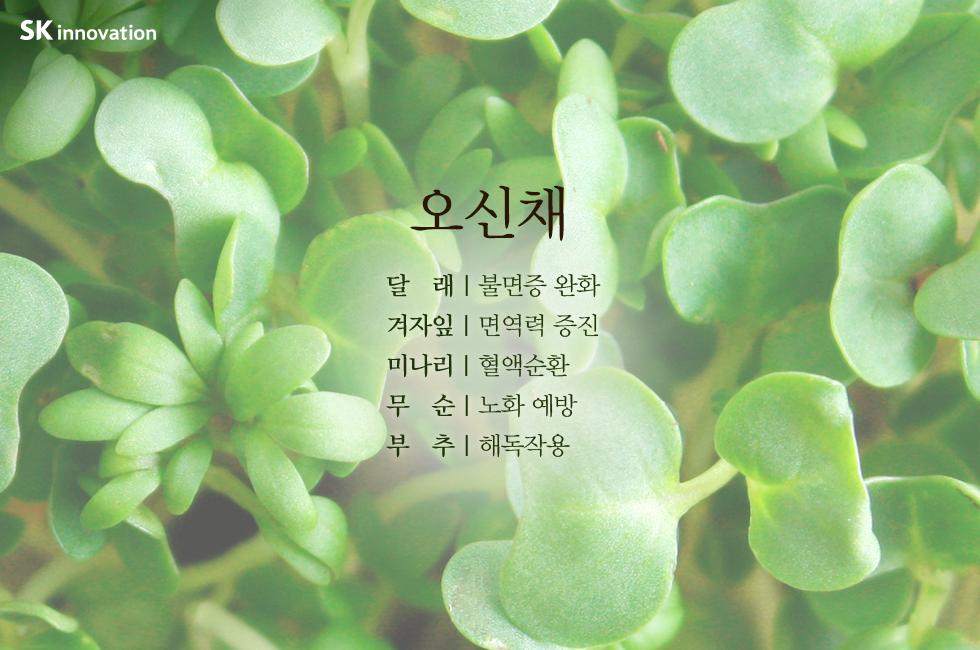 입춘_본문04