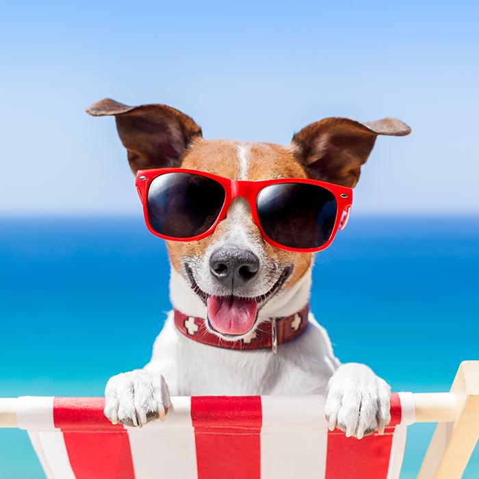 더위에 지친 반려동물을 위한 마이펫 여름나기 ♬