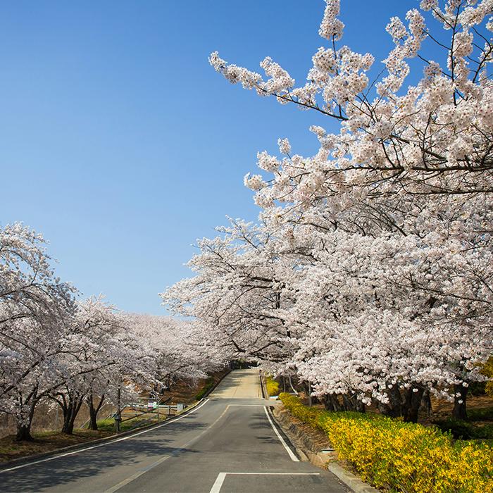 SK인천석유화학의 봄, 함께 즐겨요! 지역사회와 함께하는 2018 행복 나눔 벚꽃축제
