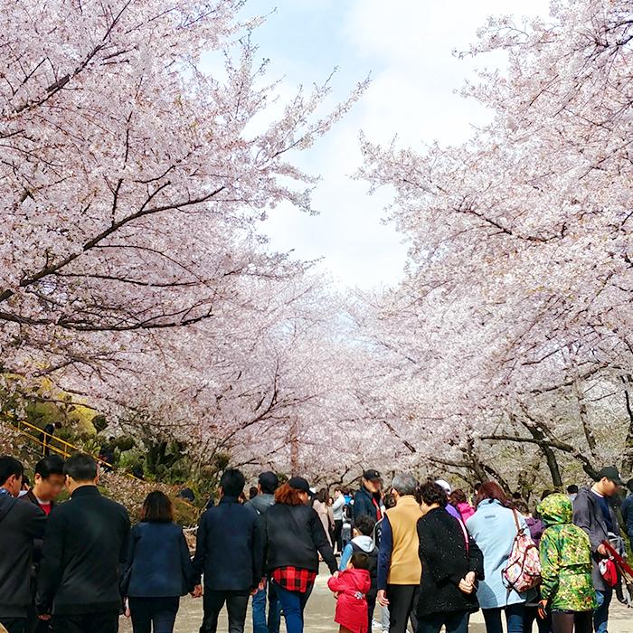 SK인천석유화학에 분홍빛 꽃비가 내리던 날, '지역사회와 함께하는 2018 행복나눔 벚꽃 축제'에 가다!