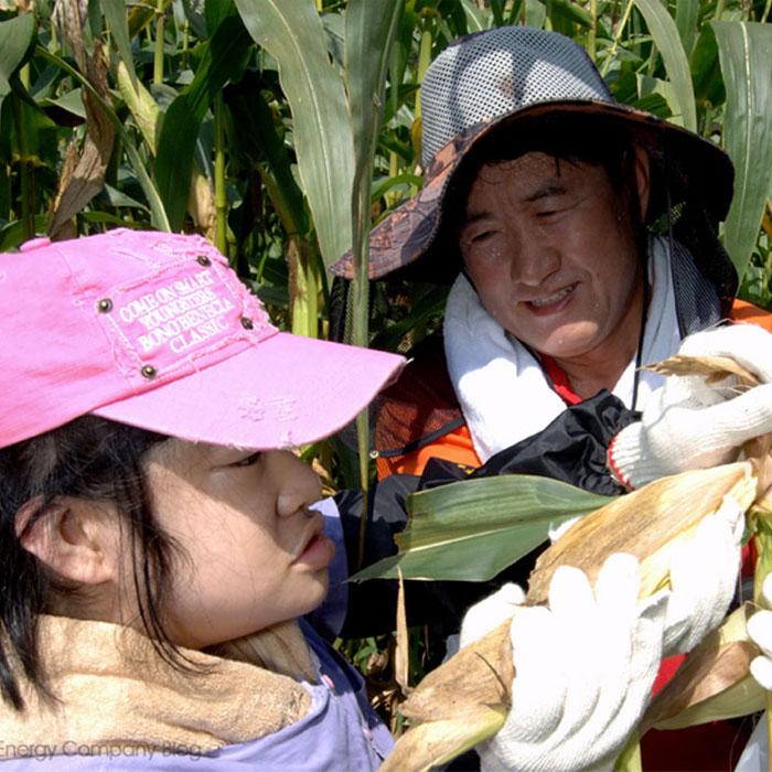 """[행복농장] """"관심과 사랑으로 키운 옥수수를 나눠드립니다"""""""