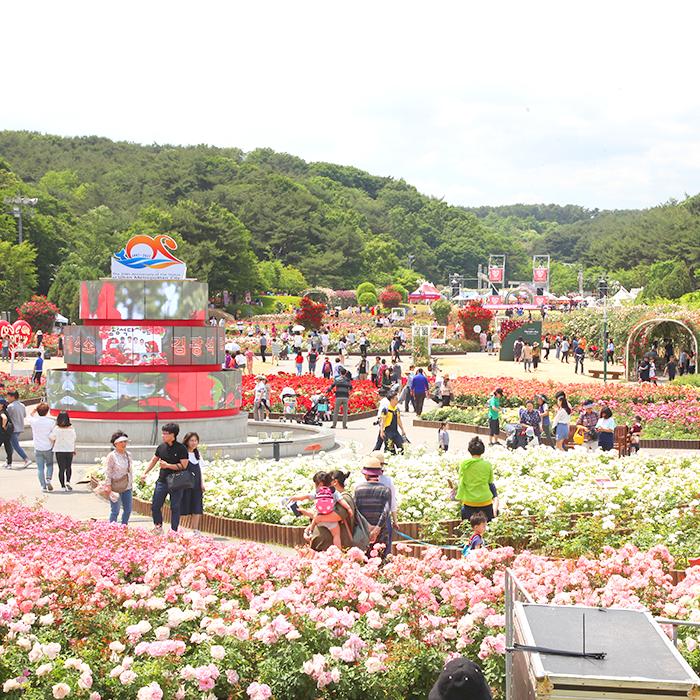 SK 울산Complex와 함께하는 제12회 울산대공원 장미축제 (5/18~5/27)