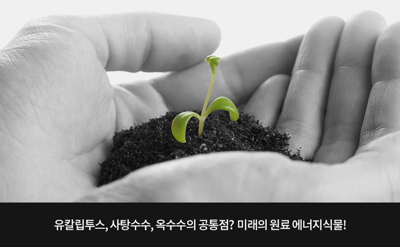 유칼립투스, 사탕수수, 옥수수의 공통점? 미래의 원료 에너지식물!