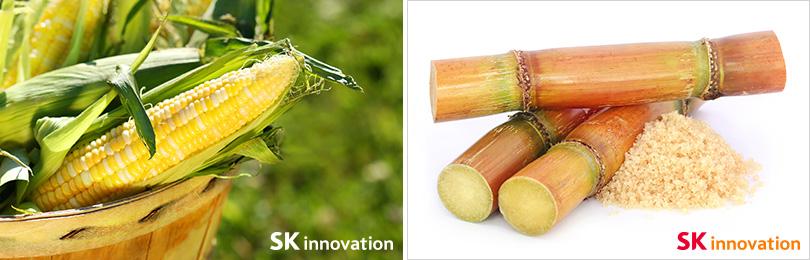 옥수수 & 사탕수수 사진